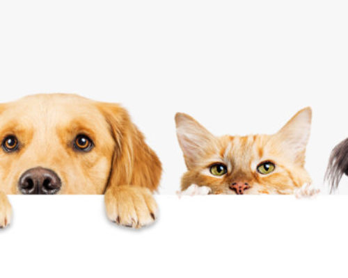 Dogs and Cats Peeking Over Web Banner
